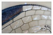 Closeup of the Dragon fly wing - lots of windows