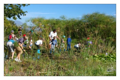 Pond Clearing at the Helderberg Nature Reserve