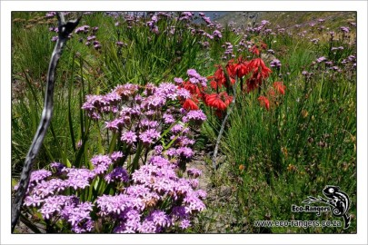 floral-mix-at-mont-rochelle-nature-reserve