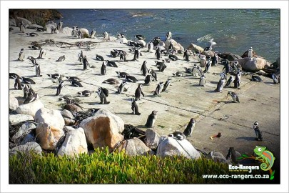 african-penguin-basking-in-the-sun