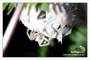 rain-spider-under-her-nest