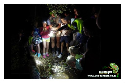 tadpoles-and-frogs-on-the-night-walk